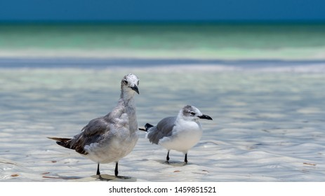 two seagulls standing in shallow water on the beach of Holbox Mexico