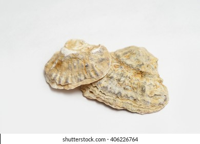 Two seashells on white background