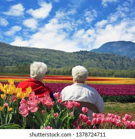 Two senior ladies seated outside,  enjoying the springtime view of the tulip flower fields in full bloom. Chilliwack, British Columbia, Canada. Colorful spring tulips flowering.