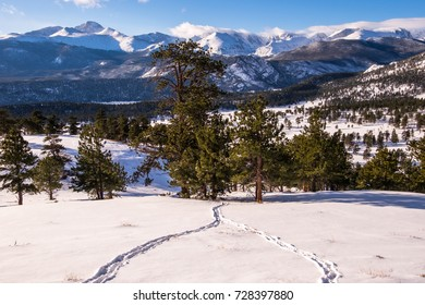 Two sets of elk tracks converge at Rocky Mountain National Park