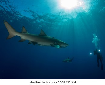 Two sharks swim around underwater cameraman on ocean background with Sun on top