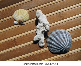 Two shell of sea scallop and sea stone on wooden background