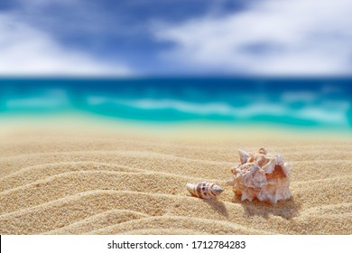 Two shells on a background of yellow clean sand. Close-up. Back blurred background of cloudy sky and sea. Free space for your text or image. A high resolution.