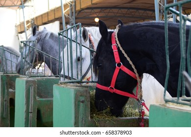 Two shots of two thoroughbred horses in the barn,eating