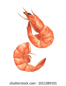 Two shrimps isolated on the white background, Hand drawn watercolor food illustration.