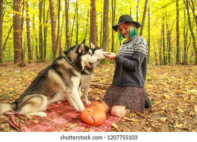 a52858c4ba4a2 Two Siberian Husky walk in the autumn forest with their mistress. Girl in a  hat