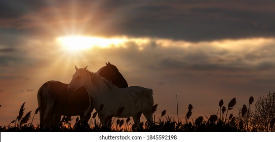 two silhouette horse in fields grass sunset.