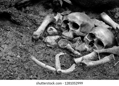 Two skulls and pile bone in the Graves discover by dig in cemetery / Select focus, Still life image and adjustment color black and white for background