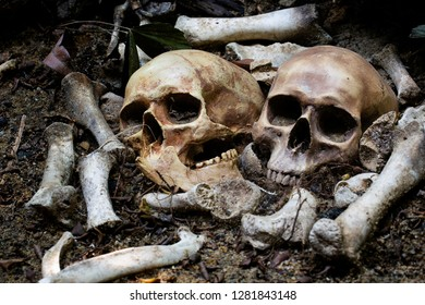 Two skulls and pile bone in the graves discover by dig in cemetery / Select focus, Still life image