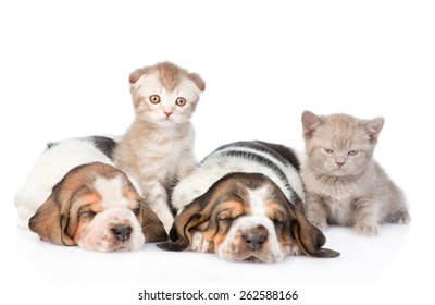 Two sleeping basset hound puppies with kittens. Focus on cat. isolated on white background