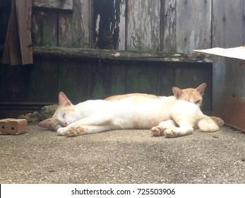 Two sleeping cat