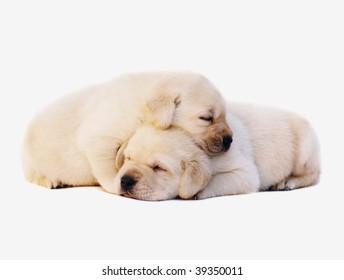 Two sleeping puppies.