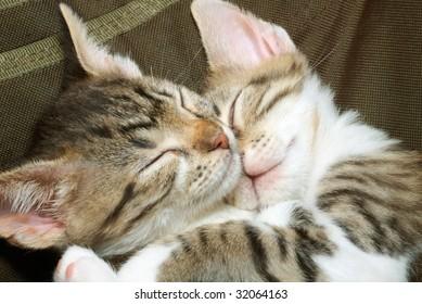 two sleeping striped kittens