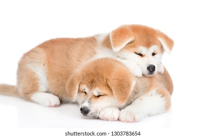Two sleepy Akita inu puppies together. isolated on white background