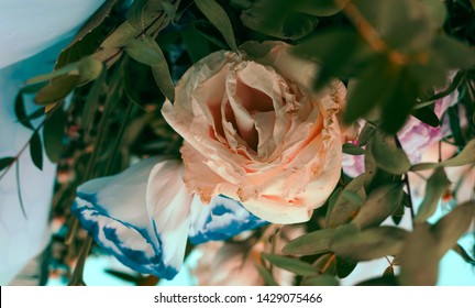 Two sluggish rose buds sticking out of the bouquet