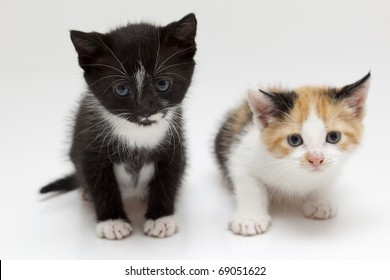 Two small cats on white background