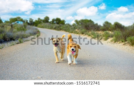 two-small-cute-stray-dogs-450w-151617274
