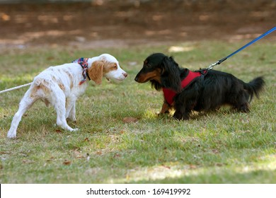 Two small dogs sniff and check each other out