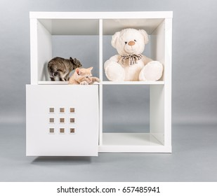 Two small kittens in a box