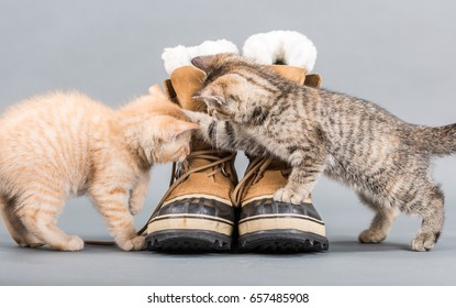 Two small kittens playing with shoes