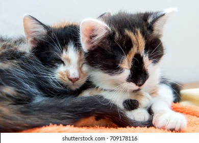 Two small kittens sleeping together on a blanket. Cute kittens lying together in bed.