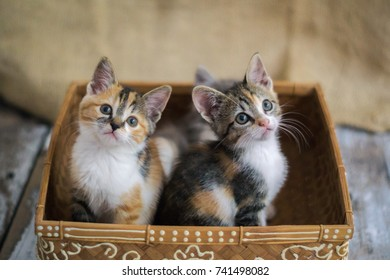 Two small kittens in a wood box