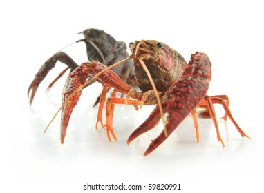 Two small lobsters on the white background