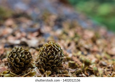 Two small pine cones on a fallen log with wood chips