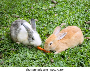 Two small rabbits in the grass, sharing a piece of carrot.