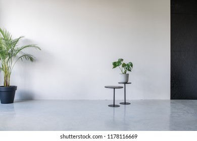 Two small round tables on the background of the gray and textured black walls in an office with glossy floor. There is a green plant in a pot on the table and other is on the floor. Horizontal.