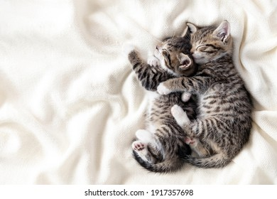 Two small striped domestic kittens sleeping hugging each other at home lying on bed white blanket funny pose. cute adorable pets cats. Copyspace.