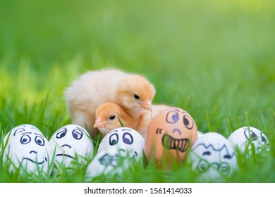 Two small yellow chick and Smile, sad, panic, sick and crying egg characters in beautiful sunlight. Mental health concept.