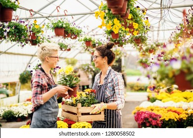 Two smiling Caucasian female florists working in greenhouse.