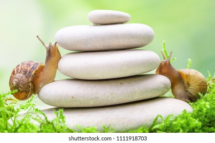 Two snails climbing on a stack of pebbles. Competition and challenge concept metaphore