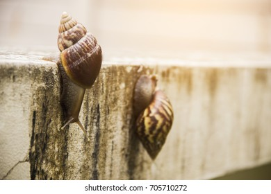 Two snails are walking on the old cement wall.