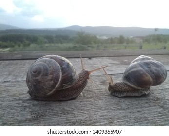 two snails watching sunset rural landscape