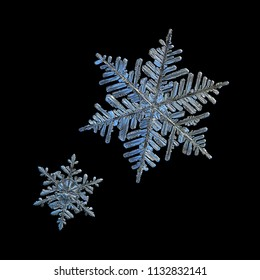 Two snowflakes isolated on black background. Macro photo of real snow crystals: beautiful stellar dendrites with elegant, ornate shapes, relief surface, fine hexagonal symmetry and complex structure.