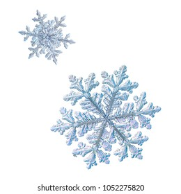 Two snowflakes isolated on white background. Macro photo of real snow crystals: large stellar dendrites with complex, ornate shapes, fine hexagonal symmetry, long, elegant arms and glossy surface.