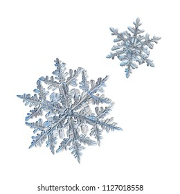 Two snowflakes isolated on white background. Macro photo of real snow crystals: large stellar dendrites with elegant, ornate shapes, relief surface, fine hexagonal symmetry and complex structure.