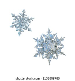 Two snowflakes isolated on white background. Macro photo of real snow crystals: beautiful stellar dendrites with elegant, ornate shapes, relief surface, fine hexagonal symmetry and complex structure.