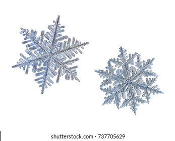 Two snowflakes isolated on white background. Macro photo of real snow crystals: large stellar dendrites with fine hexagonal symmetry, long, elegant arms with side branches and complex ornate shape.