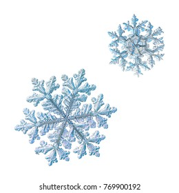 Two snowflakes isolated on white background. Macro photo of real snow crystals with fine hexagonal symmetry, glossy, relief surface, long elegant arms with side branches and complex, ornate shapes.