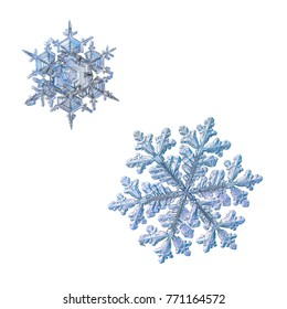 Two snowflakes isolated on white background. Macro photo of real snow crystals with fine hexagonal symmetry, glossy relief surface, complex elegant shapes and long, ornate arms with side branches.