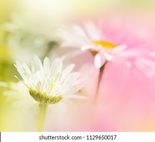 Two soft focus flowers in white, pink and green.