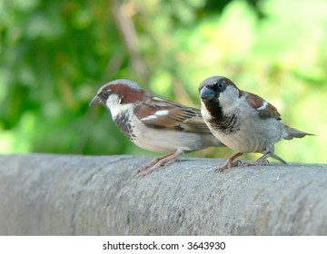 Two sparrows waiting for food