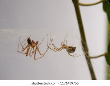 two spiders in love