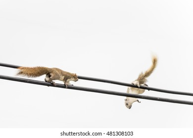 Two squirrel face on wire