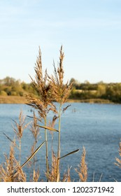 two stalks of dry grass against the background of a lake, close-up abstrakt nature background, selective focus