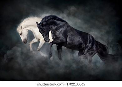 Two stallion run and play fun in desert dark dust