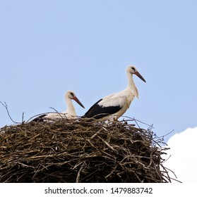 Two starches sit and stand in a big bird nest high on a roof top